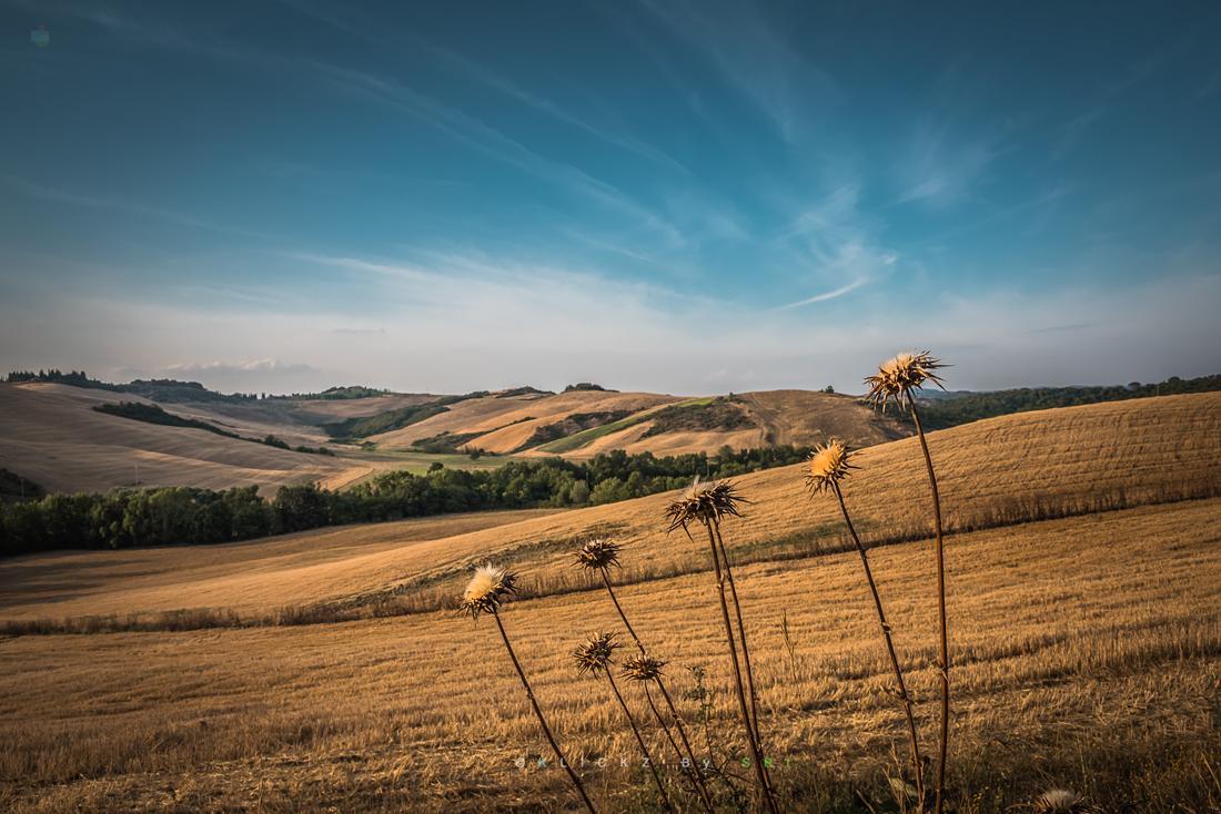 Tuscany2015_4083
